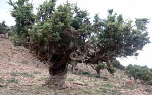 É possível estimar o contributo anual das florestas para a…