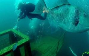 Museu de Portimão e «Ocean Revival» em conferência da Unesco