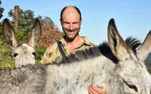 Estrada fora com cinco burros em busca de um santuário