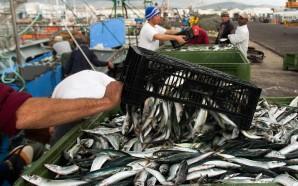 Aquacultura em mar aberto ameaça pesca tradicional no Sotavento