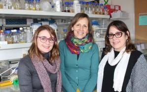 'Super' bactéria descoberta pela Universidade de Aveiro em lamas radioativas…