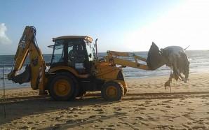 Polícia Marítima acompanha remoção de animais mortos em Vilamoura