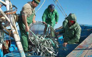 Vendas de pescado nas lotas do Algarve movimentam 34,1 milhões…