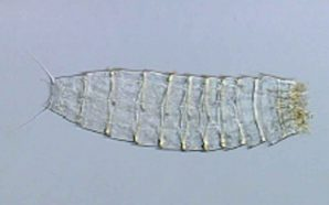 Descobertas duas novas espécies para a ciência em Faro e…