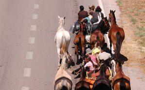 Sociólogo defende estatuto especial para ciganos