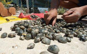 PCP questiona governo sobre compensação salarial aos mariscadores de Monte…