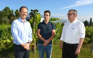 Alterações climáticas vão afetar a viticultura europeia até ao final…