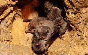 Conheça o admirável mundo dos morcegos em Santa Rita