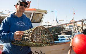 Falta de isco ameaça pesca do polvo no Algarve
