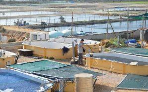 Ladrões estragam anos de investigação científica em Olhão