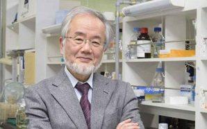Nobel da Medicina para o japonês Yoshinori Ohsumi
