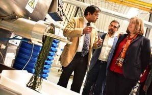 Programa Operacional «CRESC Algarve 2020» apoia 238 empresas