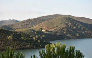 Operação «Montanha Verde» vai plantar 5800 árvores em Silves