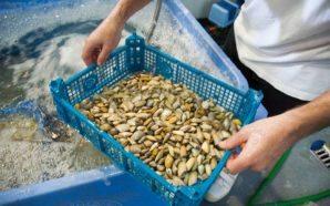 Algarve 2020 apoia empresas algarvias