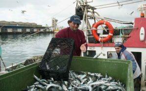 Preço médio do pescado nas lotas do Algarve é o…