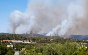 São Brás de Alportel previne incêndios com ações no terreno