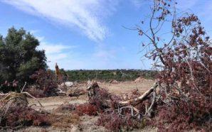 Almargem contesta destruição da Paisagem Mediterrânica do Sotavento