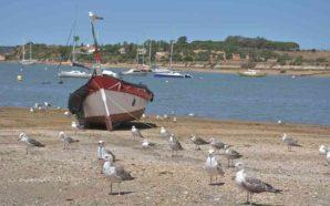 Portimão convida a um passeio de observação de aves na…