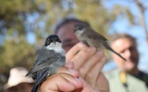 Festival de Observação de Aves & Atividades de Natureza bateu…