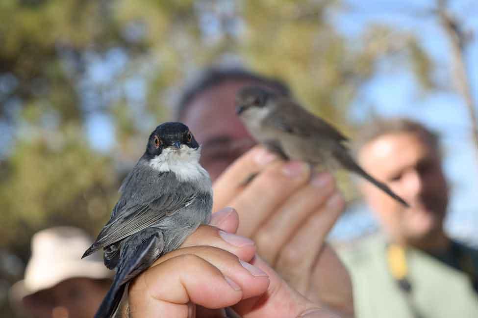 festival observação de aves