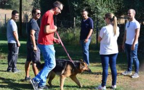 Escolas de cães algarvias organizam torneios