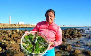 Em Olhão já há ouriços-do-mar de aquacultura