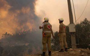 PAN quer suspensão da plantação de eucaliptos até nova lei…