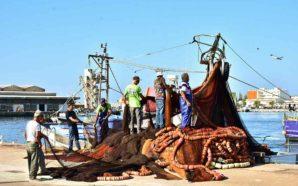 «Que pesca queremos no Algarve?» pergunta o Bloco de Esquerda…