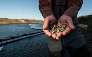 Moinho dos Ilhéus quer ser o melhor produtor de ostras…