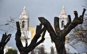 Em defesa das árvores