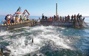 Portugal não terá quota do atum-rabilho aumentada