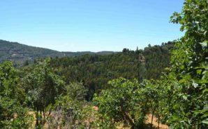Caminhada em Monchique vai mostrar importância da floresta aos participantes