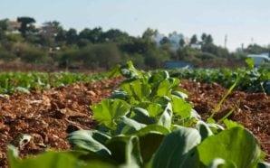 NERA debate agricultura algarvia