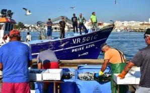 Mútua dos Pescadores critica a proibição de captura de sardinha