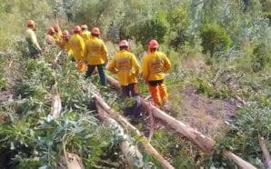 Alcoutim financia ações de prevenção de incêndios