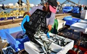 Empresários debatem ameaças e oportunidades do sector do mar em…