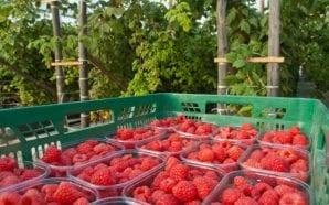 Faro acolhe fórum «Conversas de Agricultura» da Agrogarante