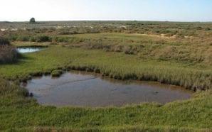Tavira sensibiliza jovens para preservação das zonas húmidas