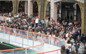 Forum Algarve «vai plantar» mais de 30 mil novas árvores…