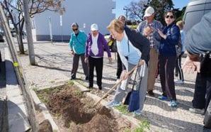 Crianças e idosos de Lagos plantam árvores por todo o…