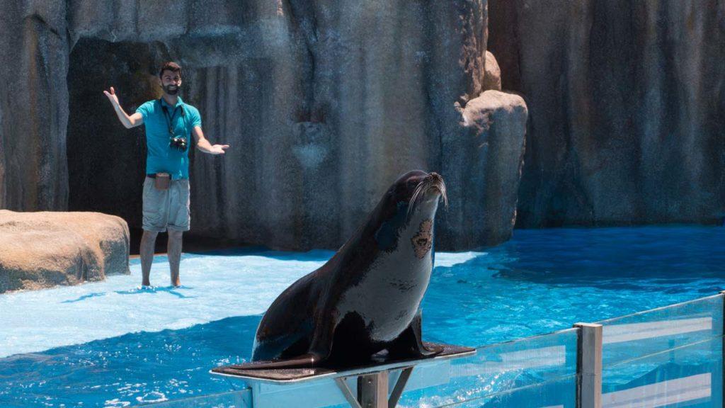 Zoomarine tem novidades também com focas e leões marinhos