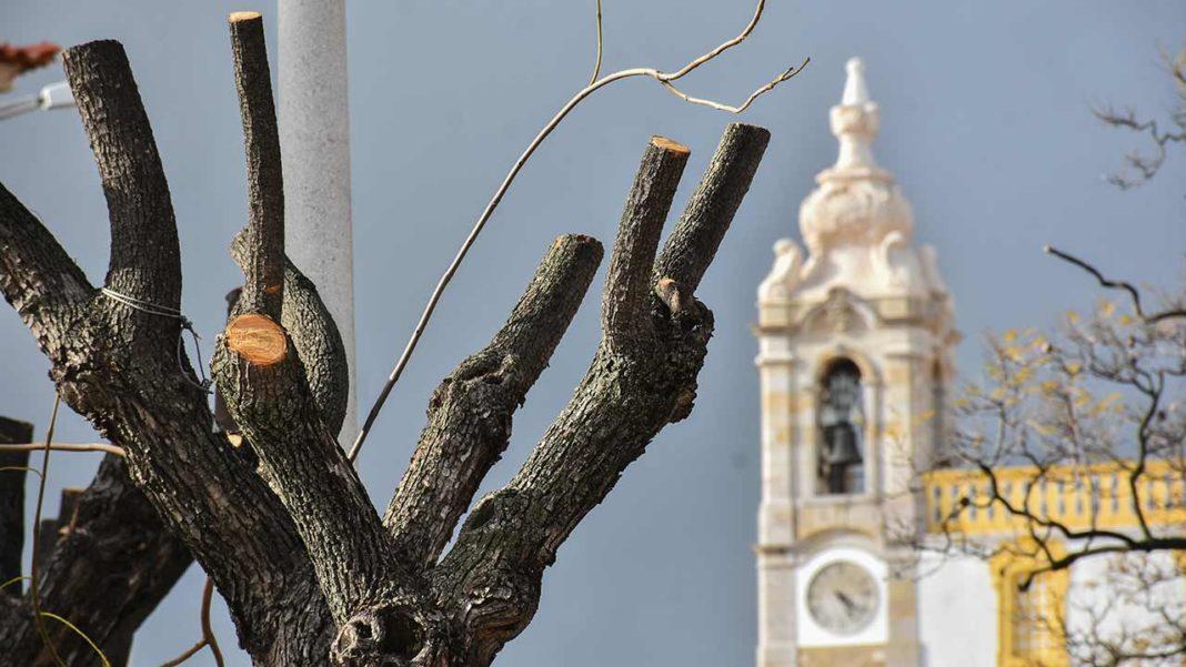 Chumbadas propostas do PS para regular e criar espaços verdes em Faro