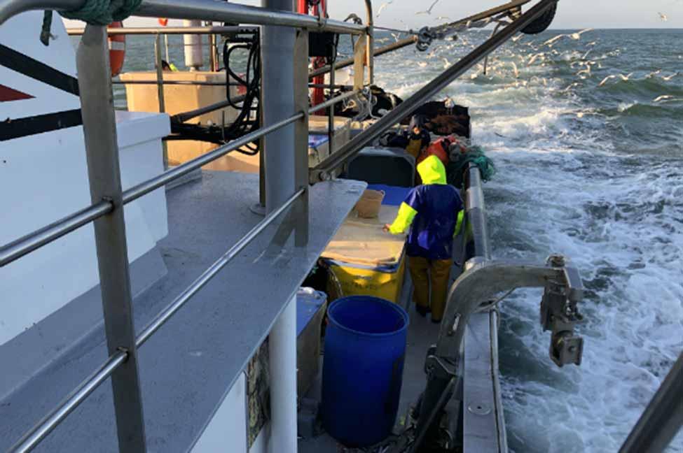 Polícia Marítima apreende 3200 kg de sardinha em Vila Real de Santo António