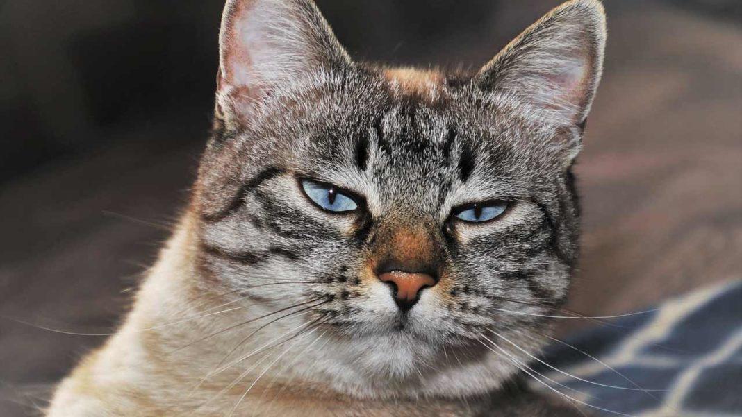 Olhão tem um grave problema de superpopulação de animais errantes