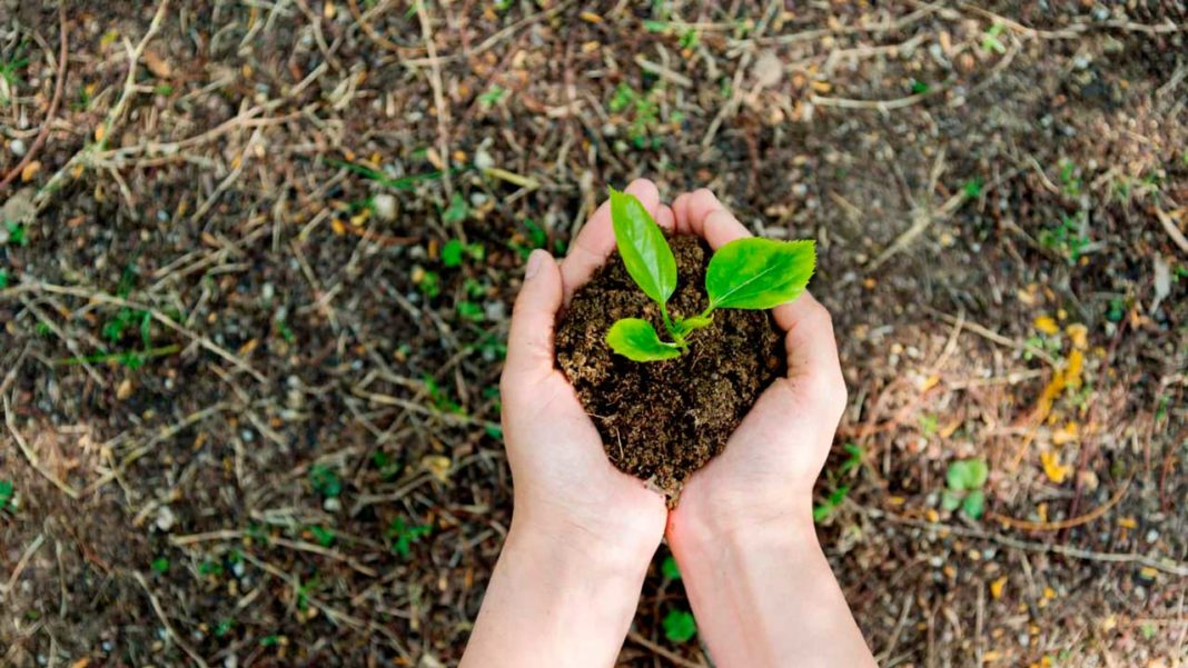 Zoomarine e Algar plantam árvores