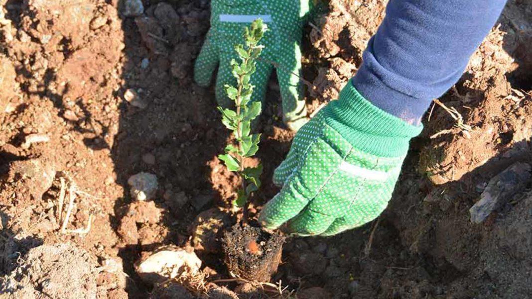 Zoomarine planta árvores