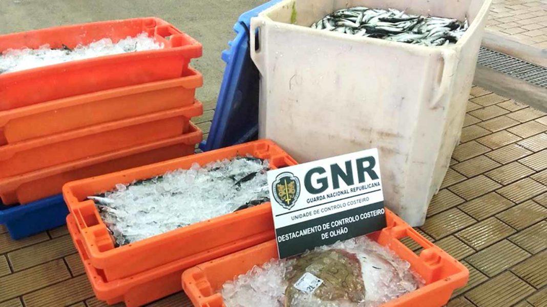 GNR apreende 347 quilos de cavala, sardinha e raia em Olhão