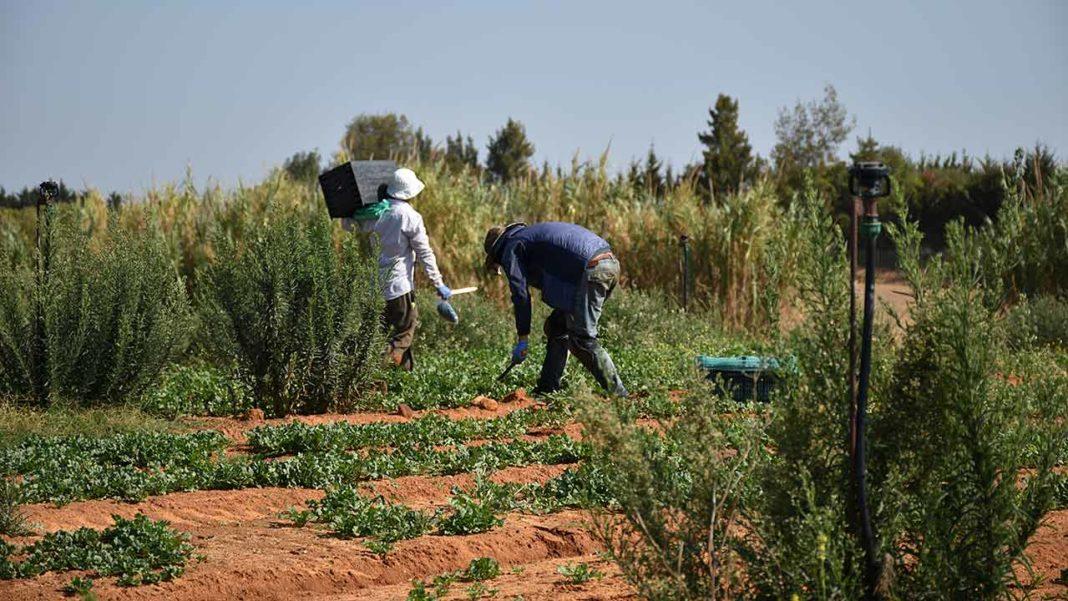 Fruticultura e agricultura moderna vão ser debatidas em Faro