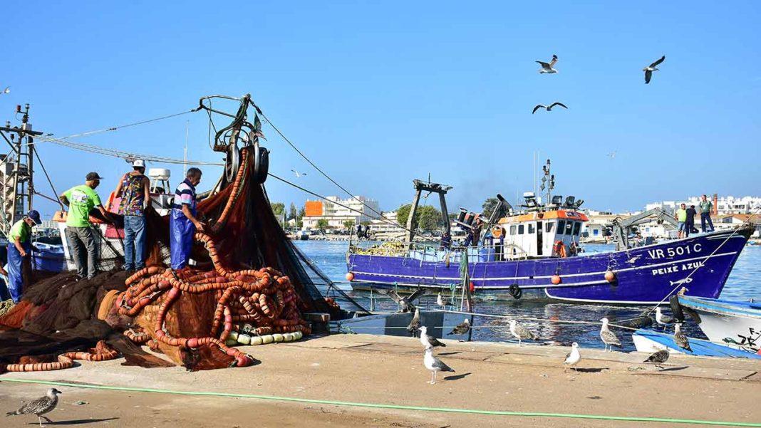 Sindicato dos Trabalhadores da Pesca do Sul diz que as opções do governo põem em causa o futuro da pesca do cerco