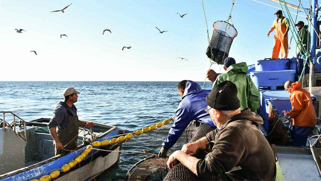 Pescadores algarvios contestam fecho prematuro da captura de biqueirão